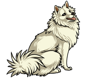 American Eskimo Dog border=