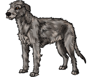 Irish Wolfhound border=