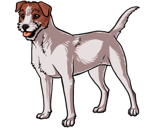 Jack Russell Terrier border=