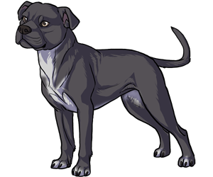Staffordshire Bull Terrier border=