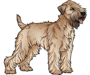 Soft Coated Wheaten Terrier border=