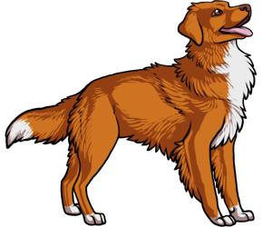 Nova Scotia Duck Tolling Retriever border=