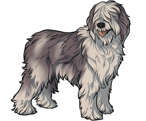 Olde English Sheepdog border=