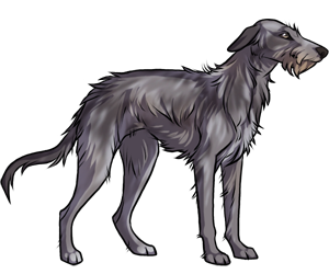 Scottish Deerhound border=