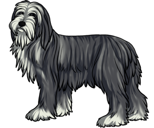 Bearded Collie border=
