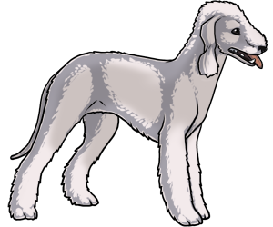 Bedlington Terrier border=