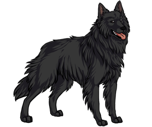 Belgian Sheepdog border=