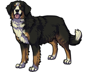 Bernese Mountain Dog border=