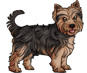 Yorkshire Terrier border=