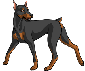 Doberman Pinscher border=