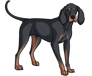 Black And Tan Coonhound border=