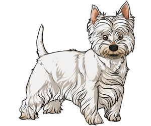 West Highland White Terrier border=
