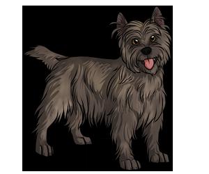 black star kennels free online dog game