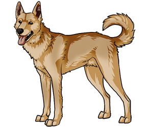 Canaan Dog border=