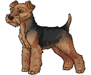 Welsh Terrier border=