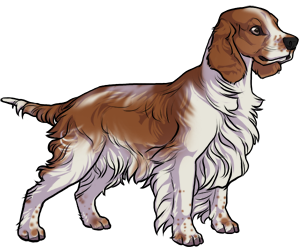 Welsh Springer Spaniel border=