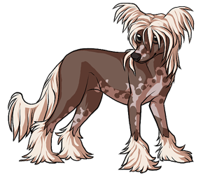 Chinese Crested border=