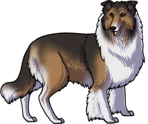Collie border=