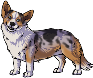 Cardigan Welsh Corgi border=