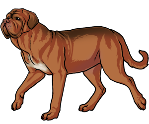Dogue De Bordeaux border=