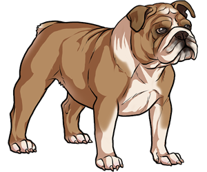 English Bulldog border=