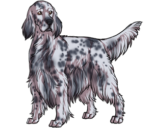 English Setter border=