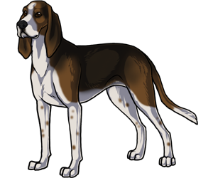 Treeing Walker Coonhound border=